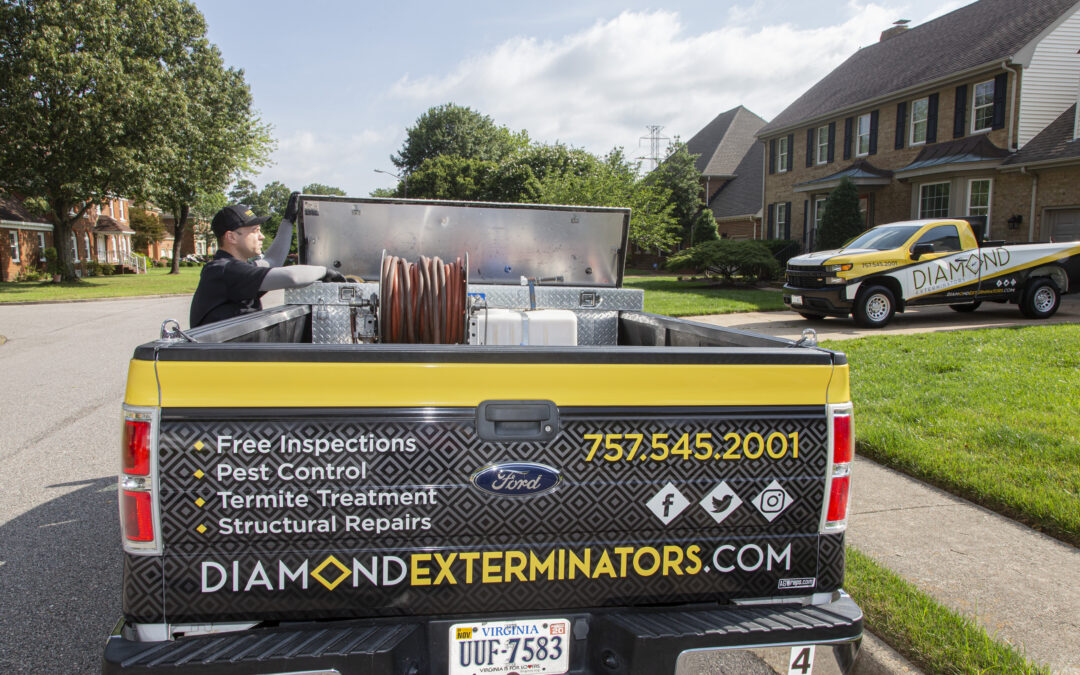 SEO Case Study: Diamond Exterminators in Chesapeake, Virginia